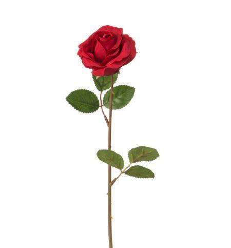 Månedens Rose