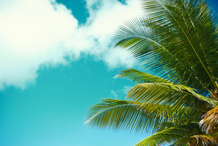 Tropical-summer-beach-with-palm-leaf-tree-branch-sea-sky-background%20%281%29